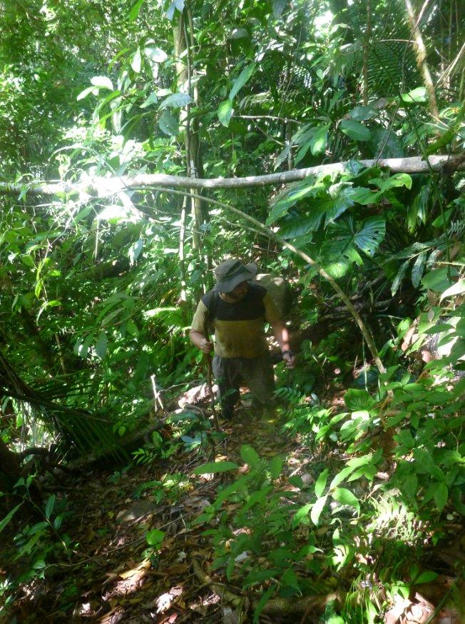 Miguel sur le layon (sentier) qu'on trace