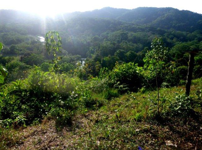 La vue sur le Rio Piedras, dans la jungle au Panama