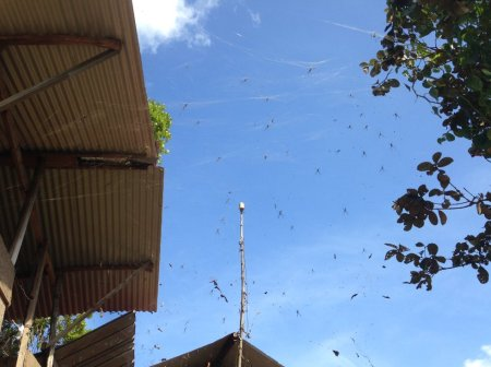 Stage de survie jungle - Araignees domestiques