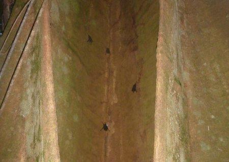 Stage de survie jungle - Chauve-souris