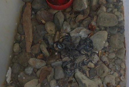 Stage de survie jungle - Elevage scorpions
