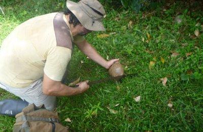 On retire d'abord la fibre autour de la noix de coco