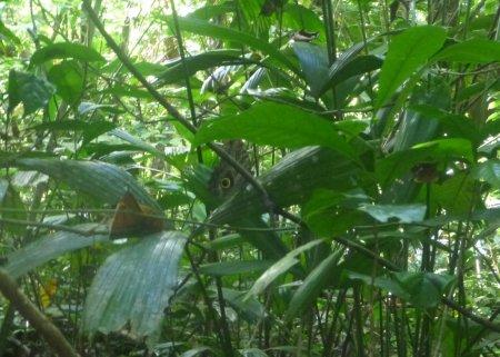 Stage de survie jungle - Papillon morpho