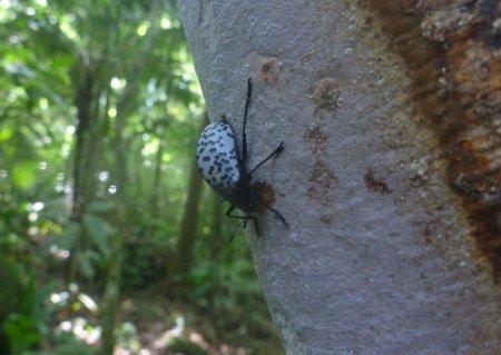 Stage de survie jungle - Scarabee