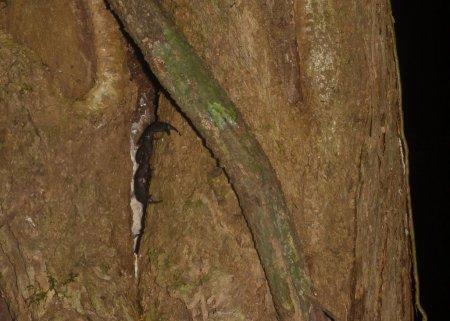 Stage de survie jungle - Scorpion arbre